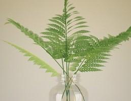 کاج مطبق در گلدان شیشه