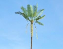 درخت Elaeis_guineensis