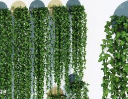 گیاهان پیچک دیواری