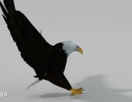 عقاب سیاه