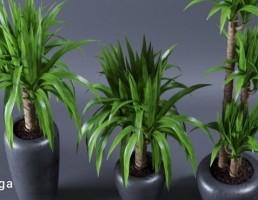گلدان + گیاهان یوکا