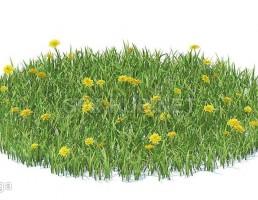 چمن + گیاهان خودرو
