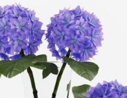 گلدان + گل مریم