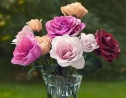 مدل گلدان و گل رز