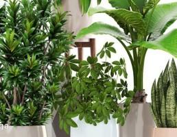 گلدان + گیاهان آپارتمانی