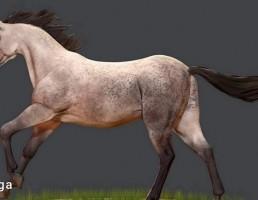 اسب نژاد اندلس