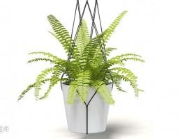 گلدان آویز + گیاهان خانگی