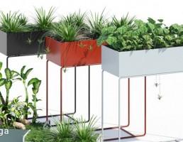 گیاهان طبیعی آپارتمانی