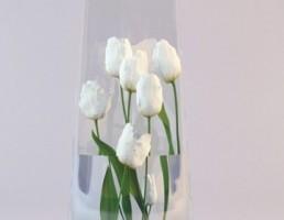 گل لاله در گلدان شیشه ایی