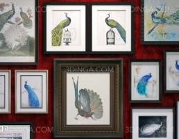 قاب عکس هایی از طاووس