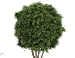 درخت در معرض باد