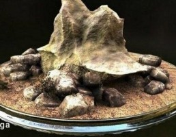 صخره سنگی + قلوه سنگ