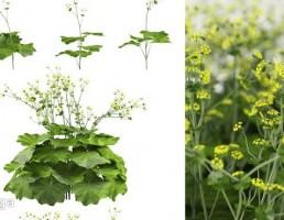 گیاهان بهاری