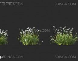 گل های باغی