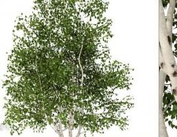 درخت سرسبز بهاری