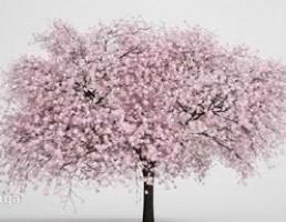درخت صورتی