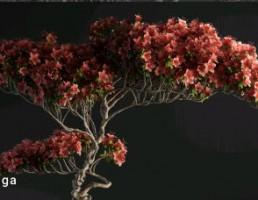 گل و گیاهان بونسای