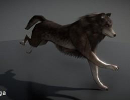 گرگ متحرک