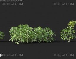 گیاهان باغی بهاری