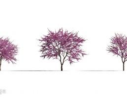 درخت در فصل بهار